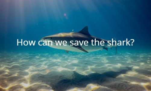 How can we save the shark?
